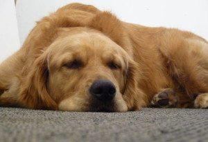 exhausted - GeneralLeadership