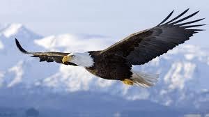 Eagle - GeneralLeadership.com